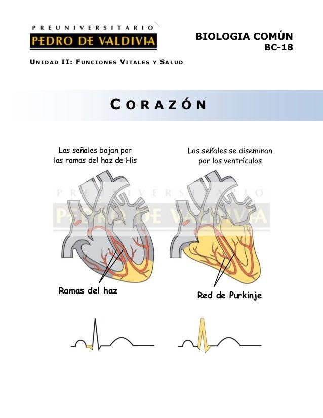 BIOLOGIA COMÚN                                                                 BC-18UNIDAD II: FUNCIONES VITALES    Y   SA...