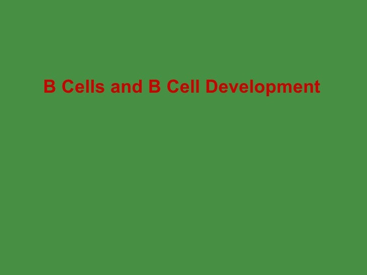 B Cells and B Cell Development