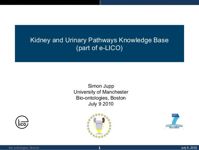 Kidney and Urinary Pathways Knowledge Base (part of e-LICO)