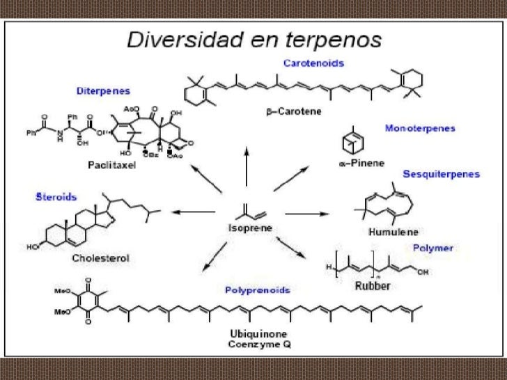 corticosteroides ejemplos