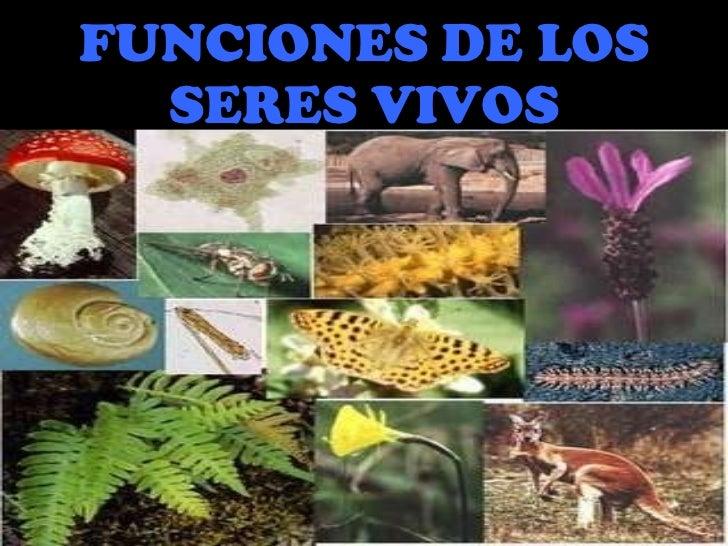 FUNCIONES DE LOS SERES VIVOS
