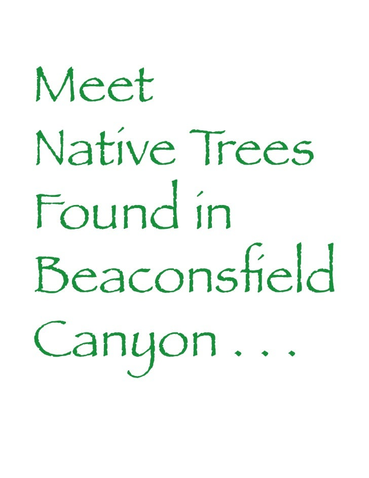 Meet Native Trees Found in Beaconsfield Canyon . . .