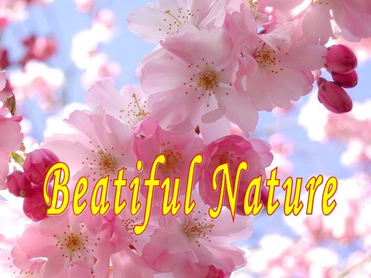 Beatiful Nature