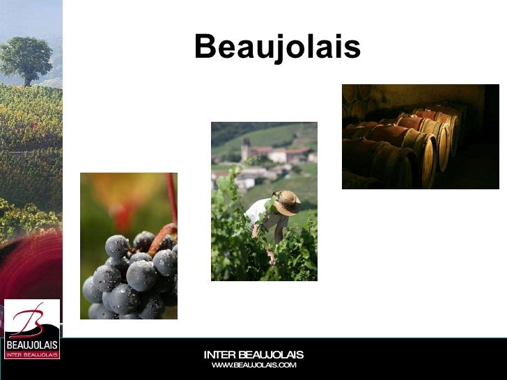 Beaujolais General Présentation 2008