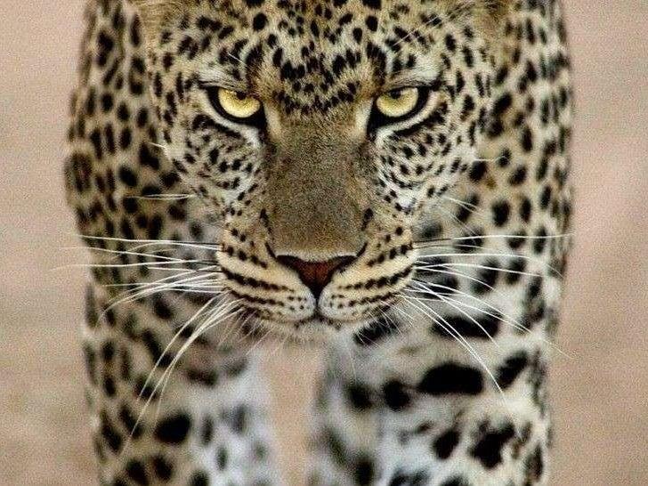 Wild Animal Pictures