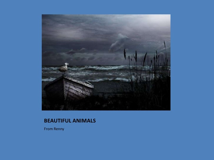 BEAUTIFUL ANIMALS<br />From Renny<br />
