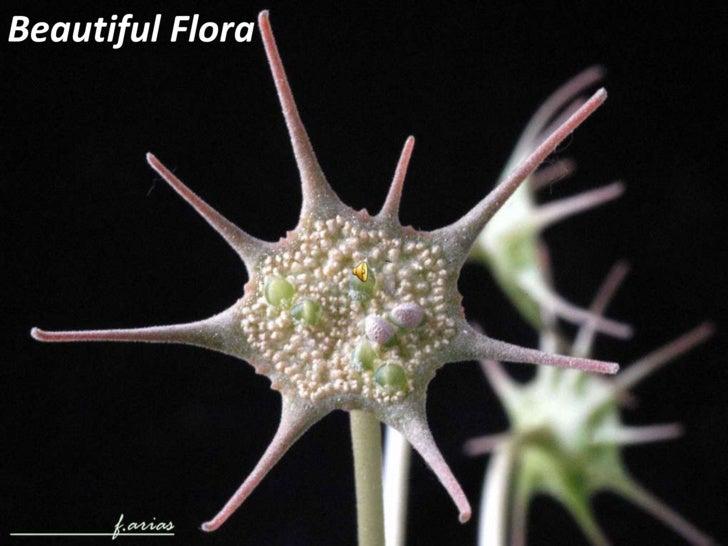 Beautiful Flora