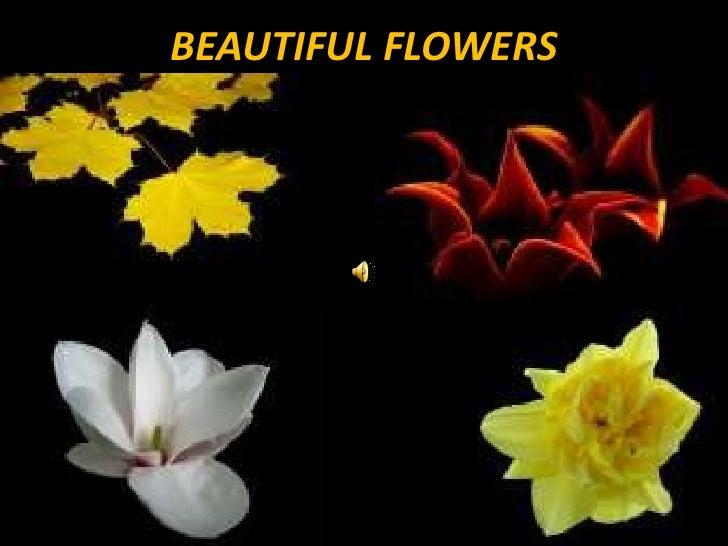 BEAUTIFUL FLOWERS<br />
