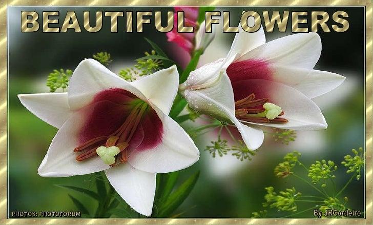 BEAUTIFUL FLOWERS PHOTOS: PHOTOFORUM By JRCordeiro