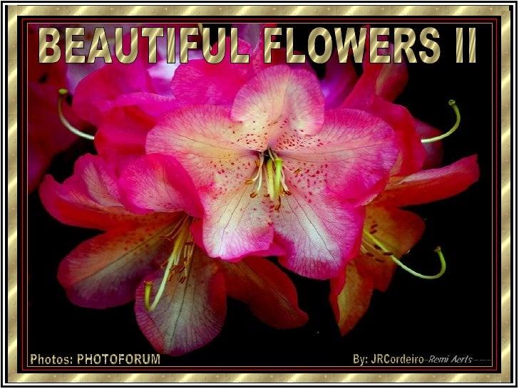 BEAUTIFUL FLOWERS II Photos: PHOTOFORUM By: JRCordeiro