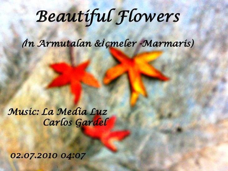 Beautiful flowers in_marmaris