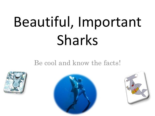 Beautiful, ImportantSharksBe cool and know the facts!