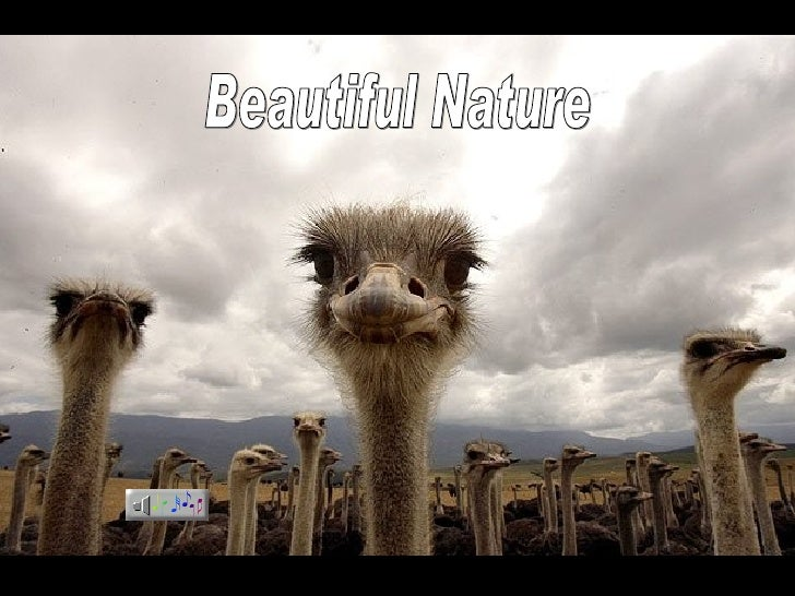Beautifulnature((Mg))