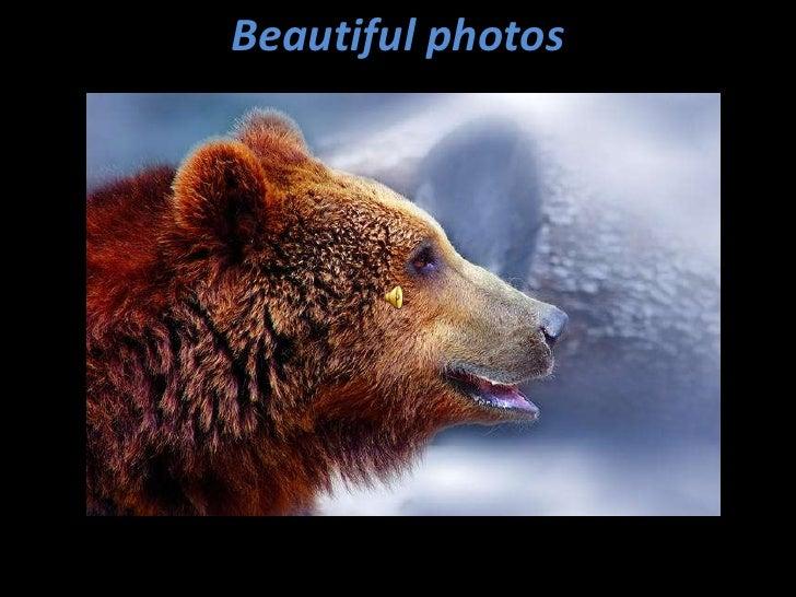 Beautiful photos<br />
