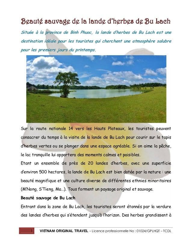 Beauté sauvage de la lande d'herbes de Bu Lach Située à la province de Binh Phuoc, la lande d'herbes de Bu Lach est une de...