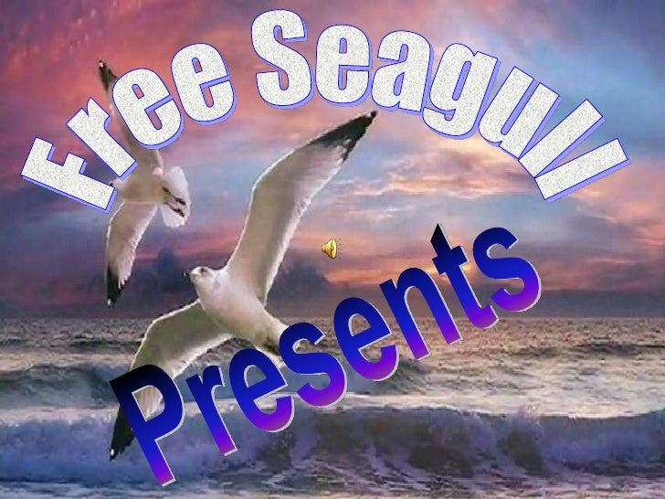 Free Seagull<br />Presents<br />