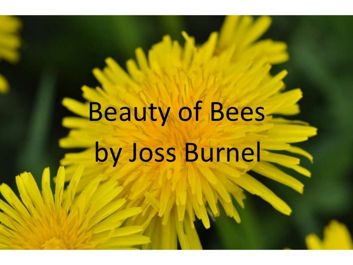 Beauty of Bees<br />by Joss Burnel<br />