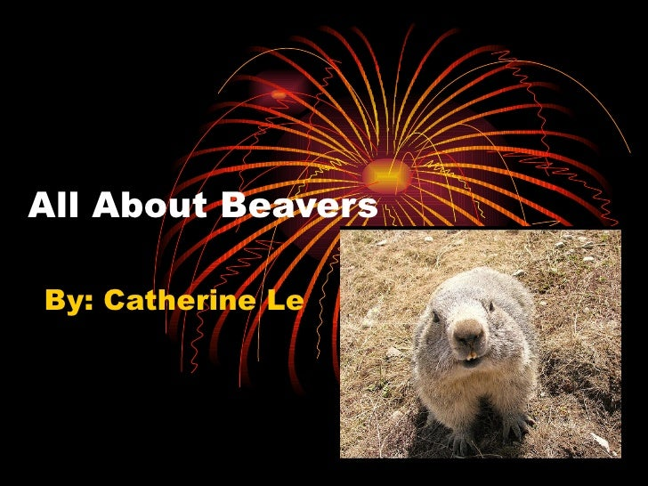 All About Beavers By: Catherine Le