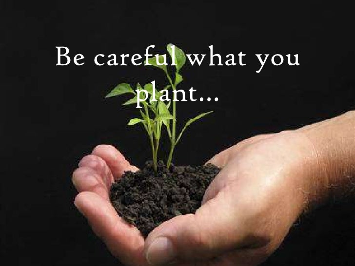 Be careful what you plant…<br />