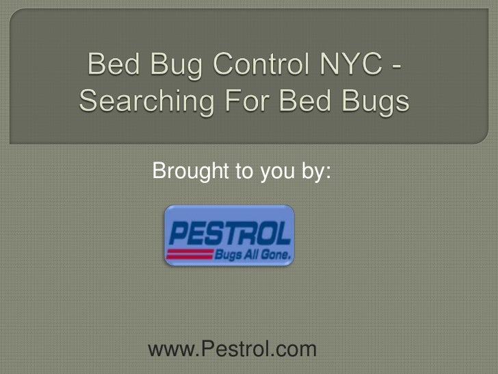 Bed Bug Control NYC - Searching for Bed Bugs