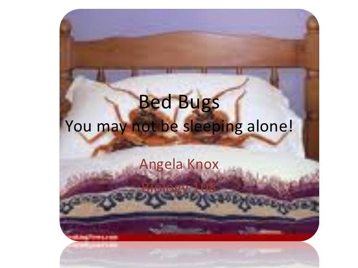 Bed Bugs You may not be sleeping alone! Angela Knox Biology 108