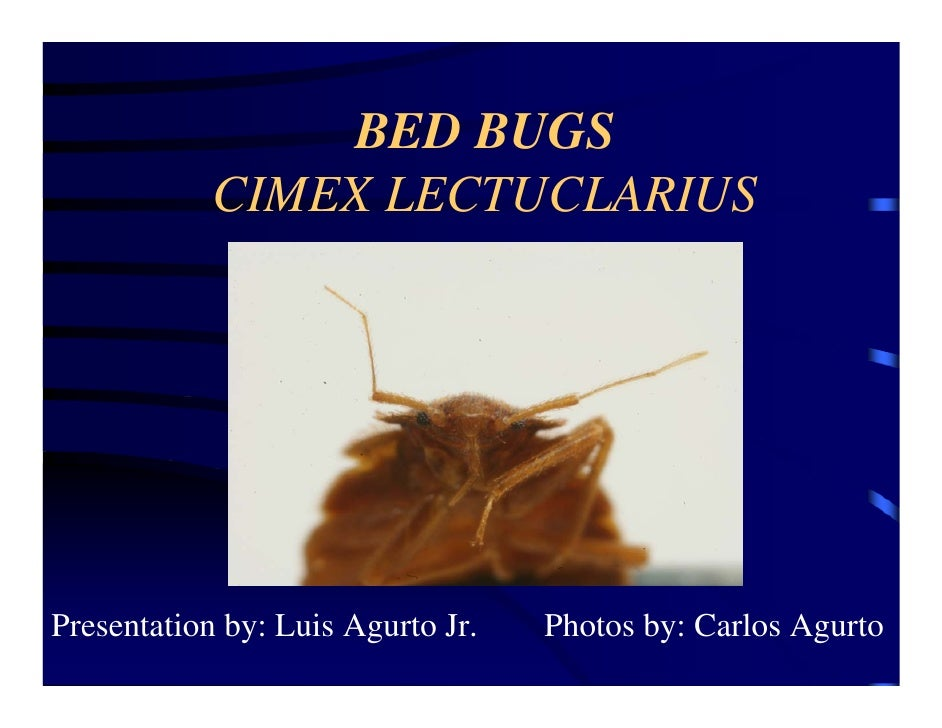 Bedbugs By Pestec