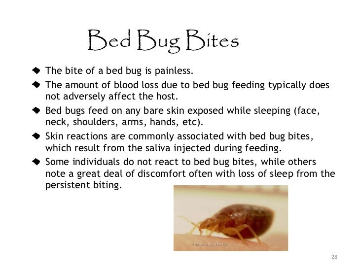 Bed bug bites on african americans - photo#19