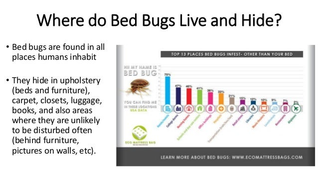 Bed Bugs How To Protect Your Library From Infestation