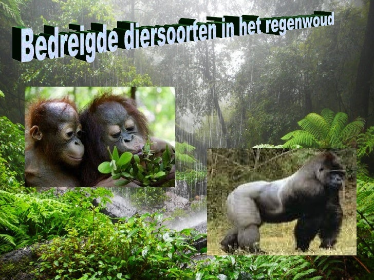 bedreigde diersoorten lijst