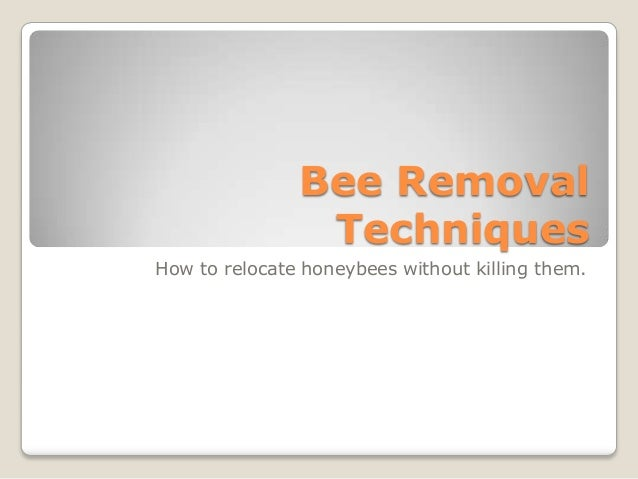 Bee Removal Techniques How to relocate honeybees without killing them.