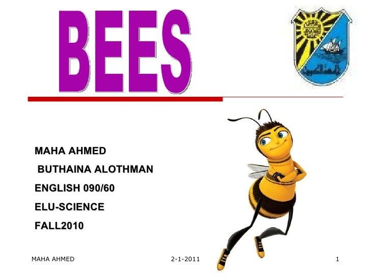 MAHA AHMED 2-1-2011 BEES MAHA AHMED BUTHAINA ALOTHMAN ENGLISH 090/60 ELU-SCIENCE FALL2010