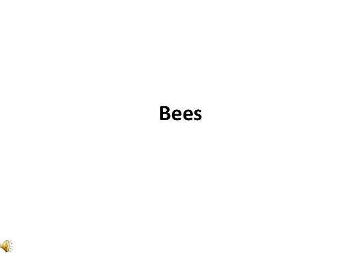 Bees images active