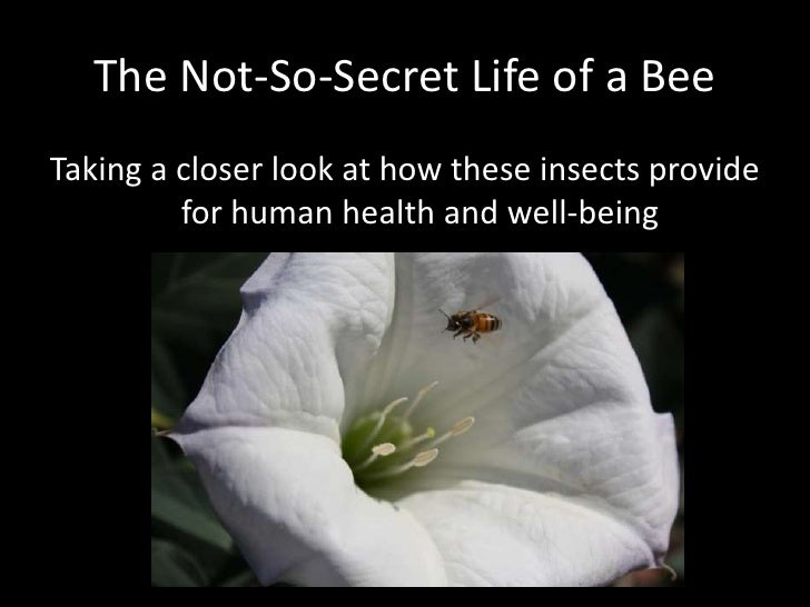 The Not-So-Secret Life of a Bee<br />Taking a closer look at how these insects provide for human health and well-being<br />