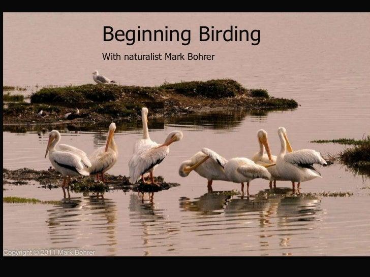 Beginning Birding  With naturalist Mark Bohrer