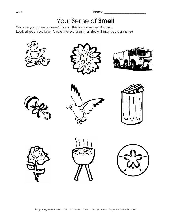 Aprender Ciencias Naturales En Ingls on Ears Worksheets For Preschool