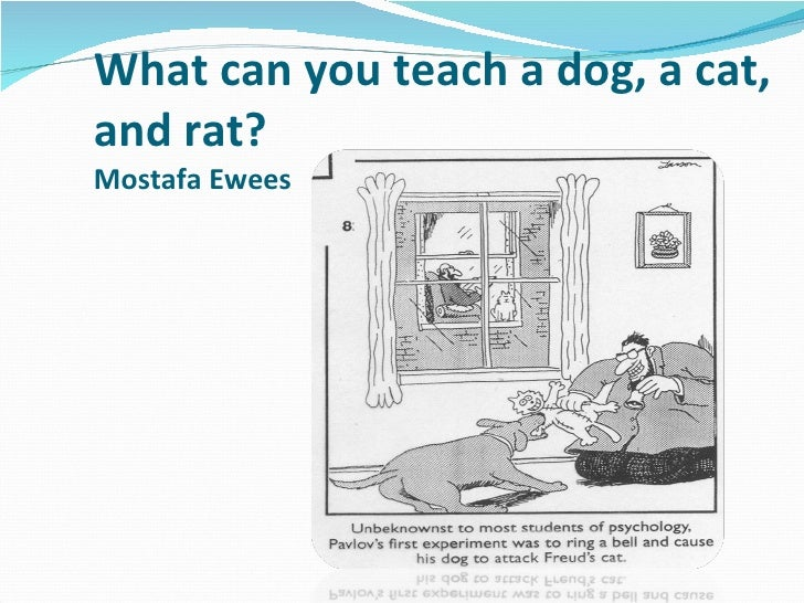 What can you teach a dog, a cat, and rat? Mostafa Ewees