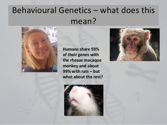 Behavioural Genetics – what does this mean? Humans share 93% of their genes with the rhesus macaque monkey and about 99% w...