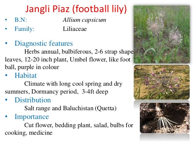 Ornamental Plants of India