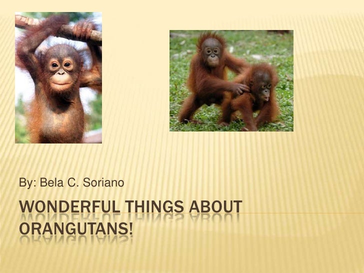 Wonderful Things About Orangutans!<br />By: Bela C. Soriano<br />
