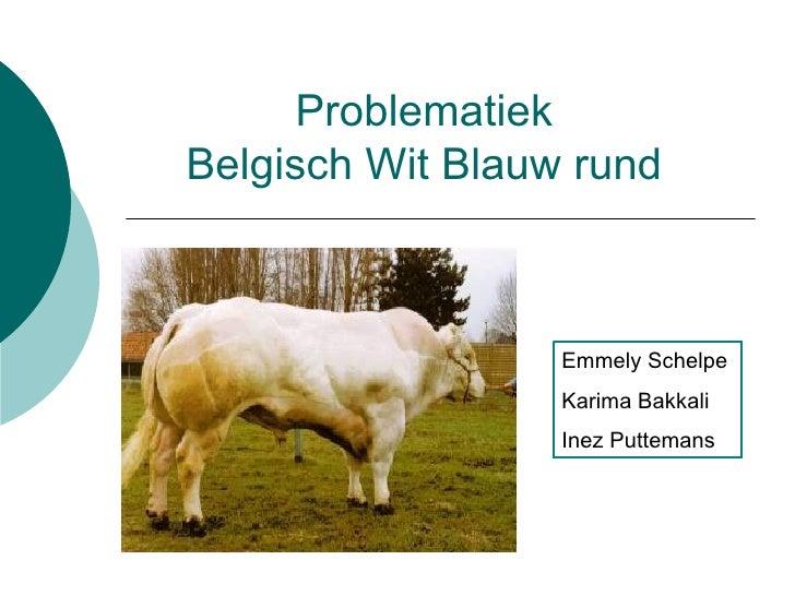 Belgisch Wit Blauw rund