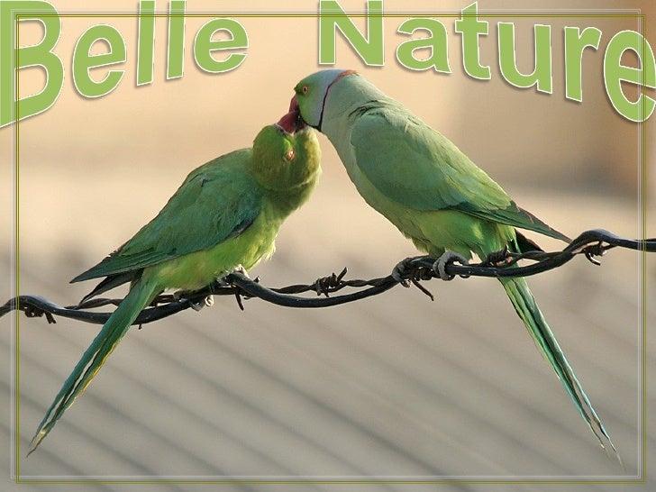 Belle Nature J50