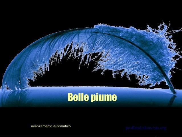 Belle piume