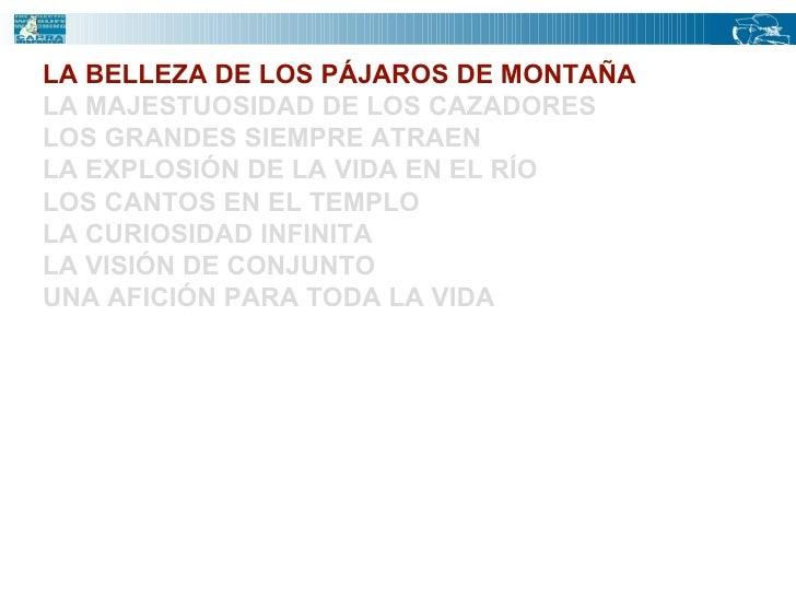 LA BELLEZA DE LOS PÁJAROS DE MONTAÑA LA MAJESTUOSIDAD DE LOS CAZADORES LOS GRANDES SIEMPRE ATRAEN LA EXPLOSIÓN DE LA VIDA ...