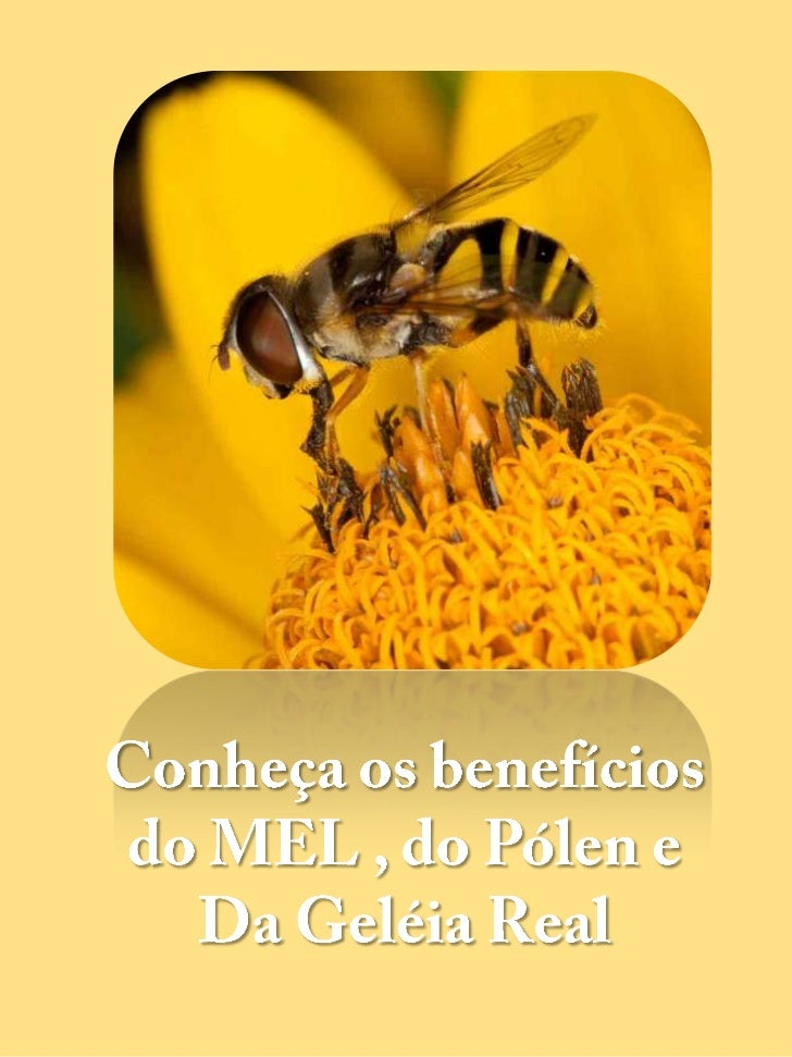 Conheça os benefícios do MEL , do Pólen e  <br />Da Geléia Real<br />