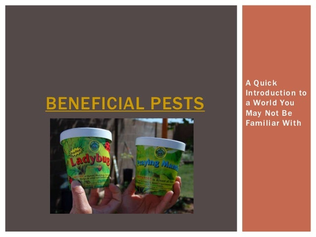 A Quick                   Introduction toBENEFICIAL PESTS   a World You                   May Not Be                   Fam...