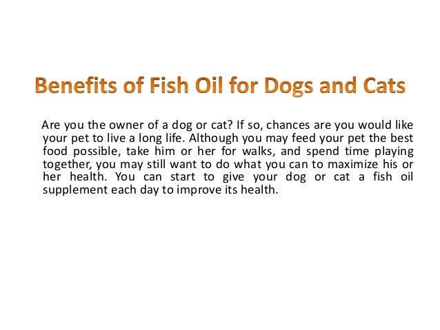 Can U Give Dogs Fish Oil