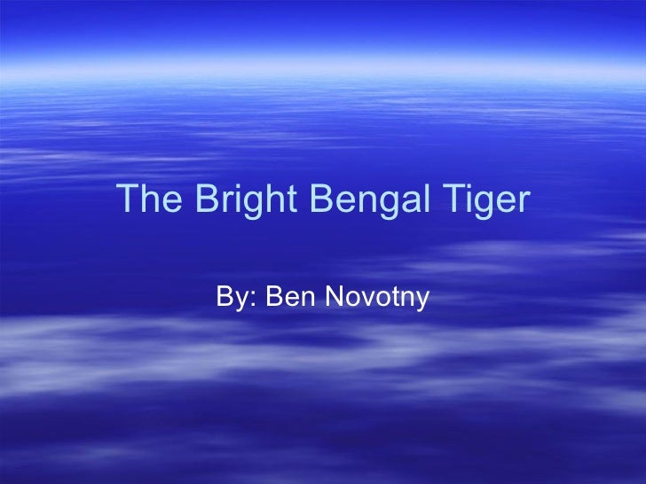 The Bright Bengal Tiger By: Ben Novotny