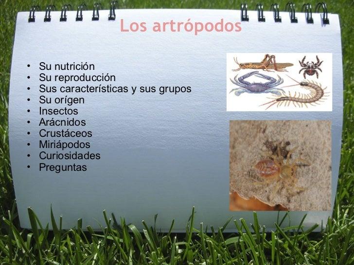 Los artrópodos <ul><ul><li>Su nutrición  </li></ul></ul><ul><ul><li>Su reproducción </li></ul></ul><ul><ul><li>Sus caracte...