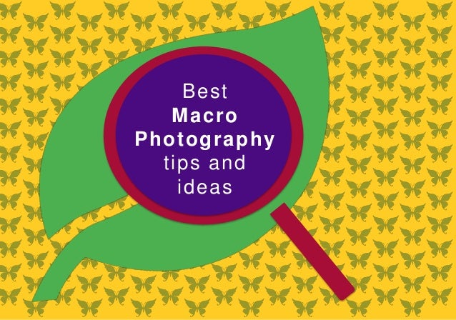 Best Macro Photography Tips And Ideas