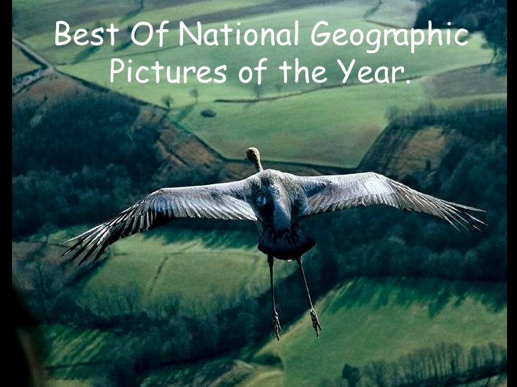 Best Of National Geographic Pictures of the Year.